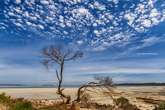 Gnarly Old tree (Jacqui Barker Photography) Tags: beach clouds coastal oldtree twistedtree coffinbay awesomesky gnarlyoldtree