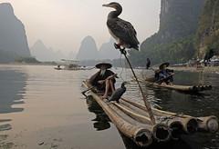 ab_SHS5850 (shamshahrin) Tags: china sunset people river landscape asian li fishing fisherman scenery asia photographer guilin culture lifestyle bamboo malaysia raft prc lijiang photojournalist imagemaker shamshahrin shamsudin