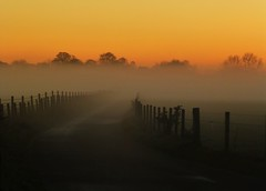 Scotch Mist..x (Lisa@Lethen) Tags: road autumn sunset mist nature weather fog fence evening scotland treetops