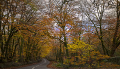 Country Road (take me home)(explored) (yadrad) Tags: road autumn southwest colour countryside devon countryroad