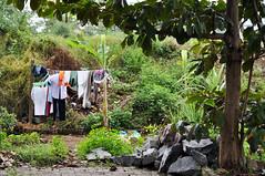 Laundry spot (Roving I) Tags: trees clothing vietnam laundry greenery clotheslines danang drying