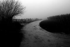 Vineyards (mexou) Tags: winter bw mist pavement vineyards wormeldange 50mmf12 koeppchen 5diii