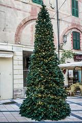 Christmas Tree - Xmas Time (corrado.barbero) Tags: liguria gita noli arenzano