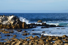 Point Pinos (Cat Harper) Tags: ocean california travel beach nature beautiful monterey scenic pacificgrove centralcoast naturephotography pointpinos travelphotography rockycoast beautifulviews travelnow