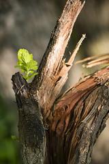 (Bolobilly) Tags: park macro tree minnesota flora minneapolis mpls twincities mn minnehaha minnehahacreek