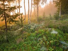 Morning glow (andreassofus) Tags: morning autumn trees sunlight mist fall nature misty fog sunrise landscape woods sweden foggy vrmland mistymorning