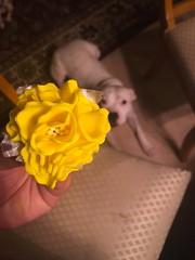 Gum paste flowers (Phxgirl) Tags: gumpaste