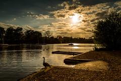 Mote Park (MarkandJackiephotos) Tags: trees lake water evening ducks motepark