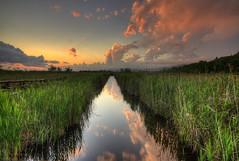 Oasi Lago massaciuccoli (Guido Pezzatini) Tags: travel sunset sky verde green clouds tramonto nuvole oasis cielo swamp tuscany toscana palude oasi