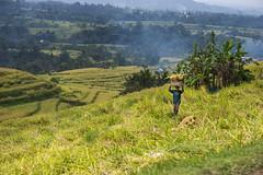 sawah 7 (Fakhri Anindita) Tags: bali nature field indonesia landscape photography nikon farm ubud sawah jatiluwih