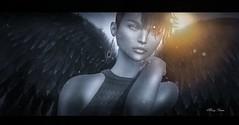 Black Angel ( Marcy) Tags: light bw black angel wings shinyshabby