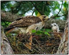 Feeding time (RKop) Tags: kentucky highlandcemetery fortmitchel a77mk2 minolta600mmf4apog raphaelkopanphotography