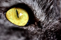 Vision (mostaphaghaziri) Tags: macro eye cat nikon flickr science vision micro nikkor friday f28 105mm d7200