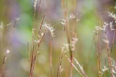 Dream a little dream of me... (Sowjanya _) Tags: light blurry soft pastel dream textures dreamy pleasing