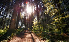 In the forest (brue') Tags: light sun forest schweiz switzerland licht ray svizzra hiking walk sg svizzera wald wandern kirchberg wanderweg strahl ghwil twil