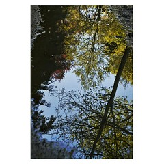 Reflet. #photo #photooftheday #nature #spring #walk #water #reflet #mirror #sky #skyblue #trees #phography #passion #colors #colorful #relax (florethibaut18) Tags: trees sky nature water colors relax mirror photo spring colorful walk reflet passion skyblue photooftheday phography