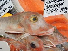 Day Boat Cornish Red Gurnard, Furness Fish & Game, Borough Market, Southwark, London (2) (f1jherbert) Tags: food fish london vegetables fruit mushrooms nikon market herbs boroughmarket sausages coolpix borough southwark pate nikoncoolpix southwarklondon boroughmarketlondon s9700 boroughmarketsouthwark boroughmarketsouthwarklondon coolpixs9700 nikons9700 nikoncoolpixs9700