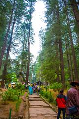 DSC_1949 (Amishrit) Tags: mountain snow rock forest garden landscape temple shimla flora nikon manali kulu chandigarh kufri rohtang hadimba d7100 vasista