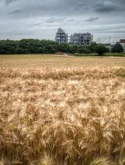 Warrington landscape 01 HD jun 16 (Shaun the grime lover) Tags: summer plant field barley warrington industrial cheshire farm hdr walton chemical
