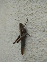 Relax. (vitinhoscrates) Tags: animais animal animals natureza nature bug inseto riodejaneiro rj brasil brazil