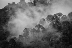 Breath in ... (_Amritash_) Tags: weather clouds rainclouds movingclouds himalayas himachal himalayanlandscape trees landscape forest travel travelindia travelinindianhimalayas monochrome monochromemadness blackandwhite india