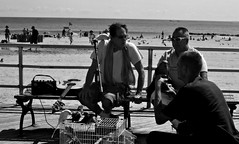 Speak Paulie! (Robert S. Photography) Tags: coneyisland boardwalk parrots people guitar bench beach summer sand birds bw monochrome brooklyn newyork canon powershot elph160 iso160 color musicians entertainers animals september 2016