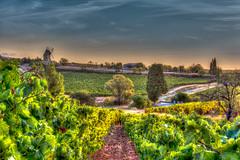 Les vignes...de mon moulin (Shoot Enraw) Tags: ciel villeneuveminervois 18200mmf3556 aude aube moulin poset vignes