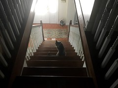 Random Photos! - What are you waiting for?! (Polterguy30) Tags: stairway stairs stair silhouettes silhouette kitty cats cat funny random