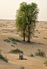 Desert tree (Tigra K) Tags: dubai unitedarabemirates ae 2013 landscape nature plant tree wood