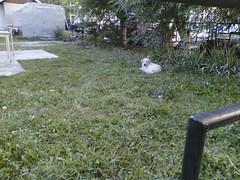 IMG04103 (chicore2011) Tags: dog churchyard