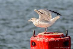 Ready for take off (JnHkstr) Tags: ameland fotoclub gespot