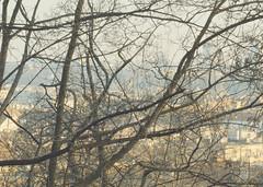 6645 (nogliwog) Tags: prague fall urban roofs branches