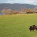 Loch Ness_9792
