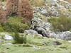 Spain Ibex Hunt & Driven Partridge Hunts 47