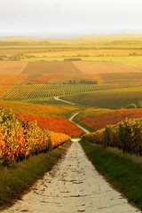 Autumn vineyard in Hungary (irecyclart) Tags: autumn vineyard hungary
