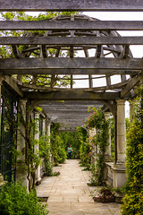 The elusive pergola of West Heath, London