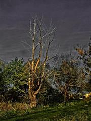 lumiere 2 (domiloui) Tags: france clouds composition automne flickr ciel arbres paysage lorraine campagne arbre couleur canton ambiance documentaire lothringen cooliris abaucourt blinkagain infinitexposure