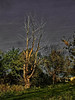 lumière 2 (domiloui) Tags: france clouds composition automne flickr ciel arbres paysage lorraine campagne arbre couleur canton ambiance documentaire lothringen cooliris abaucourt blinkagain infinitexposure