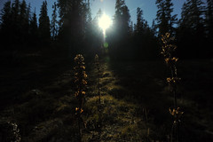 Contre-jour (Samuel Raison) Tags: light mountain montagne nikon lumire vercors hautsplateauxduvercors nikond3 rservenaturelledeshautsplateaux nikon41635mmafsgvr nikon4500mmaip nikon1450mmaf