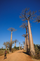 Our first visit to the Avenue of the Baobabs.