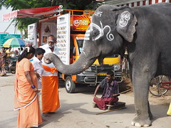 India Murugan Temple Elephant Palani Tamil Nadu Elefant Tempel (hn.) Tags: people copyright india elephant animal writing asia asien heiconeumeyer leute indian letters indians language script hindu hinduism elefant schrift indien tamil tamilnadu tier palani sprache southindia pazhani copyrighted 2014 localpeople inder indisch hinduismus tamilscript tamilisch templeelephant südindien tamilletters tempelelefant tamilwriting dindiguldistrict tamilschrift tp201415