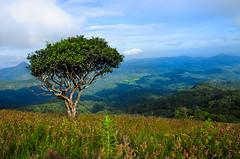 Lonely-Tree (Manjunath Bhat Mangalore) Tags: tree nature lonely karnataka wildflower westernghats naturephotography savenature nikond90