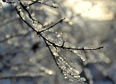 hibernation (joy.jordan) Tags: winter light snow ice sunrise bokeh branches