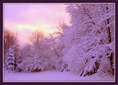 First day of Winter (edenseekr) Tags: winter sunset snowy