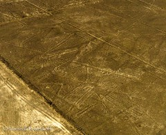 The Condor (Photography by Marshall) Tags: peru southamerica photography events aerial nazca icaregion absoluteperu2014