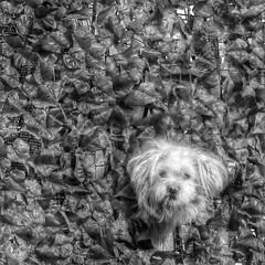 bau (mondoflash70) Tags: dog fence bau cani