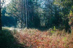 A walk in the forest (Anna Shtraus) Tags: christmas wood autumn trees winter france green nature grass fog forest landscape alley woods orleans walk magic hunting tranquility auburn nopeople tranquil tranquille tamron2875 tamron287528 withoutpeople canoneos1100d