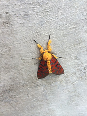 Cool nocturnal butterfly (.) on the roof of Centre