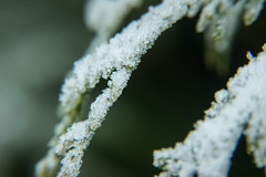 Frozen (Ludvius) Tags: snow ice norway frozen crystals ludovicophotography wwwludovicophotocom