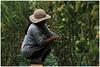 Climate change resilience - The greenhouse (kamesvara) Tags: bali greenhouse buyan buleleng